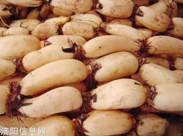 济阳回河镇大量供应莲藕,价格便宜